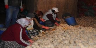 'Patates Fiyatlarında Spekülatif Artış Olmaz'