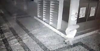 Nizip'te Fıstık Hırsızlığına 3 Tutuklama