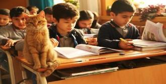 'Tombi', Sınıfa Geri Dönüyor