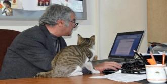 Öğretim Üyesi Üniversitede Kedi Besliyor