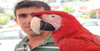 Papağan Dayaktan Dilini Yuttu
