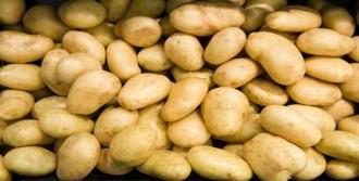 Patates Altın Çağını Yaşıyor