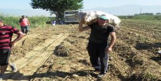 Patates Üreticisinin Fiyat Yakınması