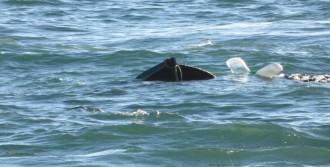 Pendik'te Balıkçı Teknesi Battı: 1 Kişi Kayıp