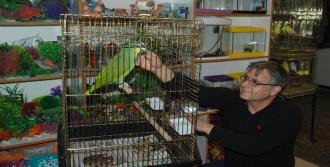 Bu Papağanın Fiyatı 7 Bin Lira