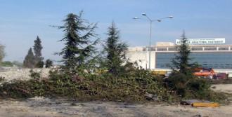 Hastane Binası İçin 100 Ağaç Kesildi