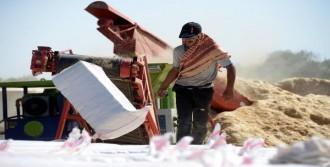 Saman Zamlandı, Çiftçinin Yüzü Güldü
