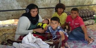 Şanlıurfa'da 6 Kişilik Aile Çadırda Yaşıyor
