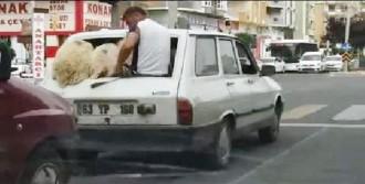 Şanlıurfa'da 'Koyun Koyuna' Yolculuk