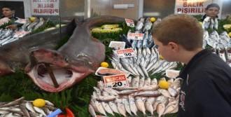 Tekirdağ'da 3 Metrelik Köpekbalığı Yakalandı
