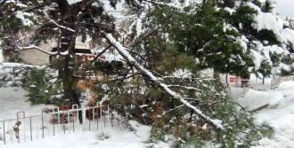 Kar Kalınlığı 70 Santime Ulaştı