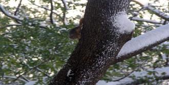 Sincaplar Karda Yemek Aradı