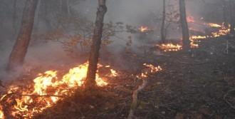 Sivas'ta 3 Hektar Ormanlık Alan Yandı