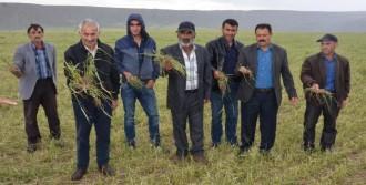 Sivas'ta Dolu Yağışı Ekili Alanlara Zarar Verdi