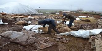 Siverek'te, Barınak Çöktü 40 Koyun Telef Oldu