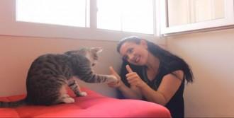 Sokak Hayvanları İçin Kısa Film Çektiler