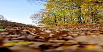 Sonbaharın Hüznü Doğaya Çöktü
