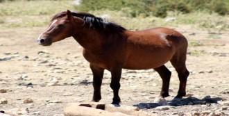 Spil Dağı 'Yılkı Atı' Levhası