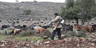 Çobanların Yaşam Mücadelesi