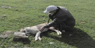Tarım İlaçlı Balıkla 5 Köpeği Zehirlediler