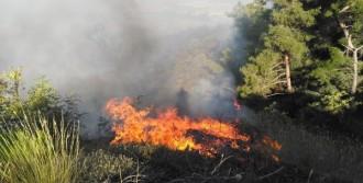 Yangın Ormanlık Alana Sıçradı