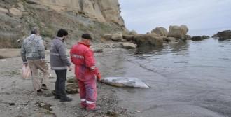 Tekirdağ'da Kıyıya Yunus Ölüsü Vurdu