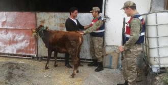 Hayvan Hırsızlığına 5 Tutuklama