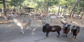 Tek Safari Parkına Ziyaretçi Akını