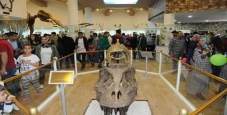 Zooloji Ve Doğa Müzesi Açıldı