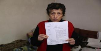 Tv Yayını İçin Ağaçları Kesen Kardeşlere 12 Bin Lira Ceza