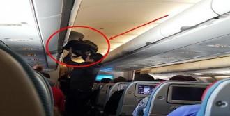 Uçakta Hırsızlık Yaptı, Yakalandı