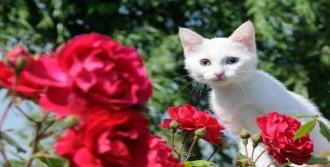 Van Kedileri Güneşlendi