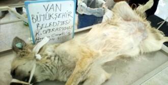 Belediye 550 Sokak Köpeğini Kısırlaştırdı