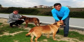 'Sokak Hayvanlarını Beslerken Dikkat Edin'