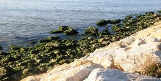Yalova'da Deniz 10 Metre Çekildi