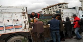 Yalova'da 8 Bin Fıstık Çamı Dağıtıldı