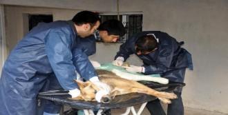 Yaralı Köpek Sağlığına Kavuştu