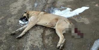 5 Köpeğin Zehirlendi İddiası