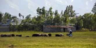 Yüksekovalı Kadın Çoban