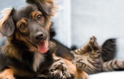 Kedi ve Köpeklerde Mantar Enfeksiyonları