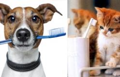 Kedi ve Köpeklerde Ağız&Diş Sağlığı