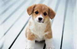 Yavru Köpek Alırken Nelere Dikkat Etmek Gerekir?