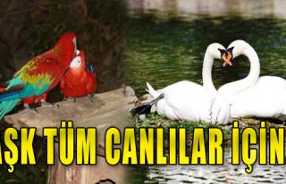 Aşk Tüm Canlılar İçin...