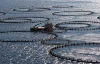 Çevre Mağlup, Balık Çiftliği Galip