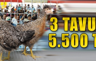3 Tavuk, 5 bin 500 TL'ye Satıldı