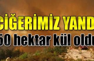 Seferihisar'daki Orman Yangını Kısmen Kontrol Altında