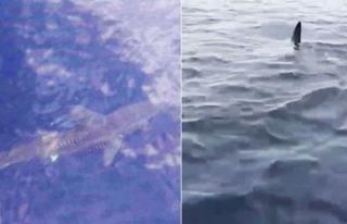 Marmaris açıklarında köpek balığı şoku