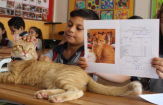 Fenomen kedi 'Tombi' karnesini aldı