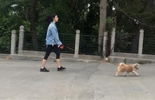 Köpeğiyle gezintiye çıktı