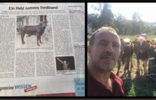 Yüzen boğa 'Ferdinand', Avrupa basınında